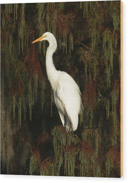 White Egret Wood Print by Jeff Wright