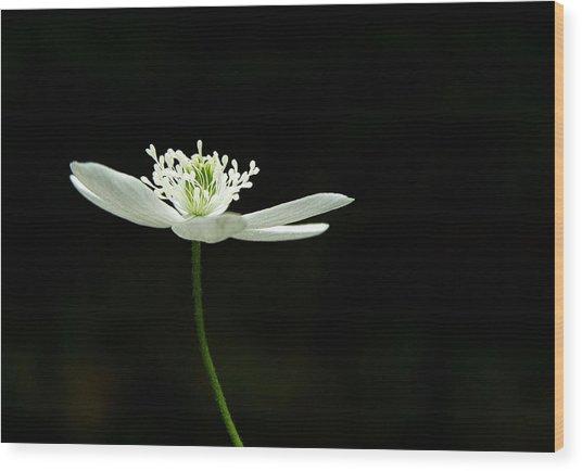 Wood Anenome Wood Print