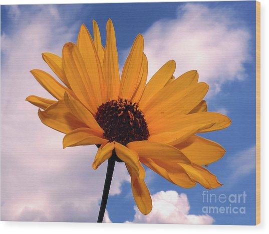 Yellow Flower Wood Print by Elvira Ladocki