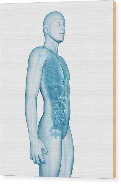 Human Anatomy Wood Print by Sebastian Kaulitzki