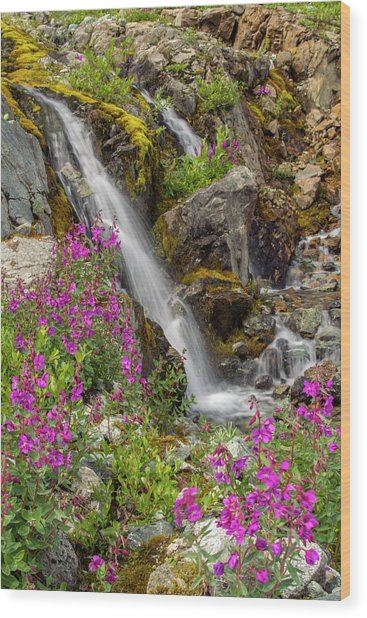 Usa, Alaska, Glacier Bay National Park Wood Print by Jaynes Gallery