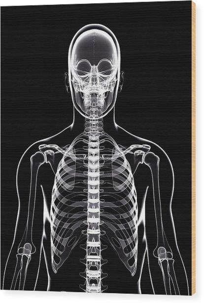 Human Skeleton Wood Print by Pixologicstudio/science Photo Library