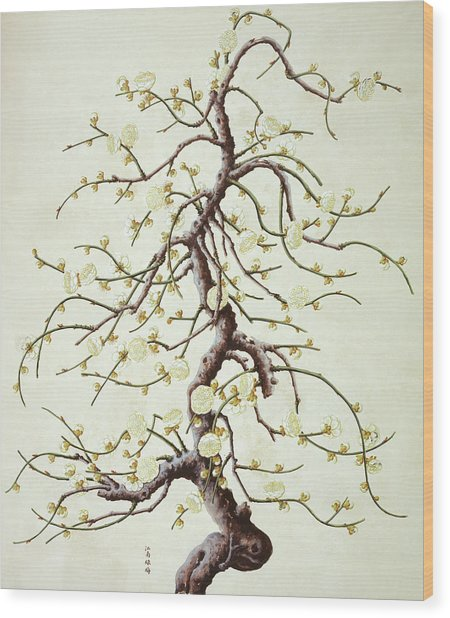Botanical Illustration Wood Print by Natural History Museum, London/science Photo Library