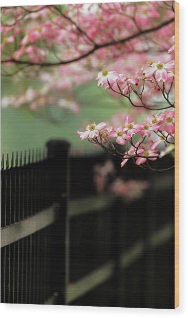 Dogwood Tree In Full Bloom, Audubon Wood Print by Adam Jones