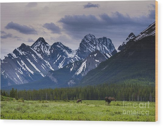 Engadine Meadow Wood Print by Ginevre Smith
