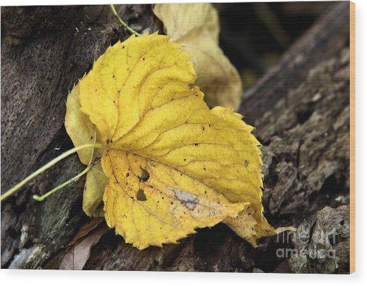 Fall Wood Print by Rick Rauzi