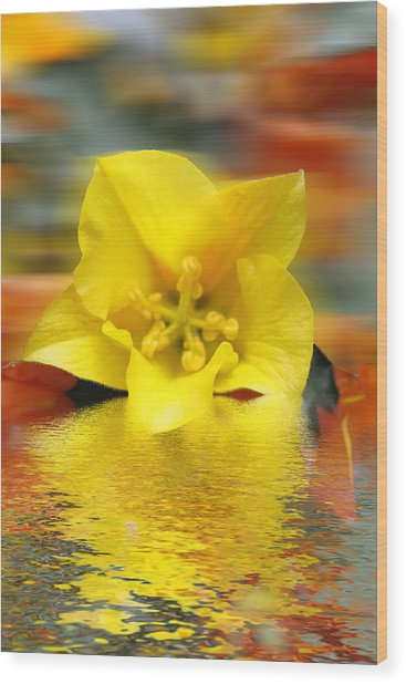 Floral Fractals And Floods Digital Art Wood Print