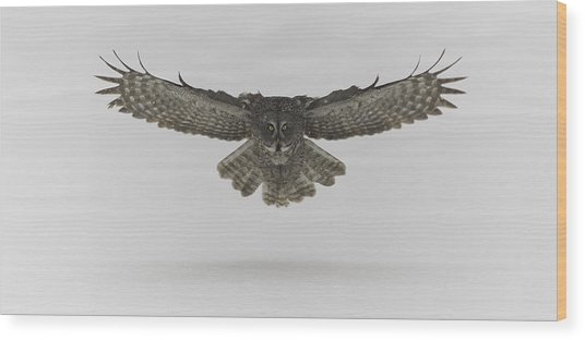 Great Grey Owl In Flight Wood Print