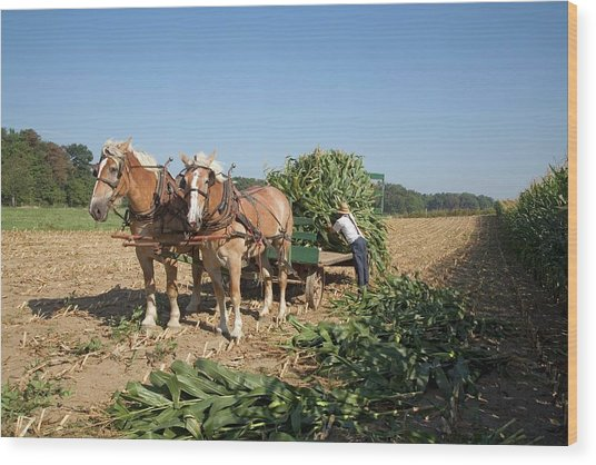 Harvest On An Amish Farm Wood Print by Jim West