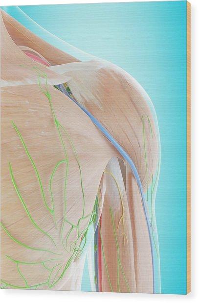Human Shoulder Anatomy Wood Print by Sciepro