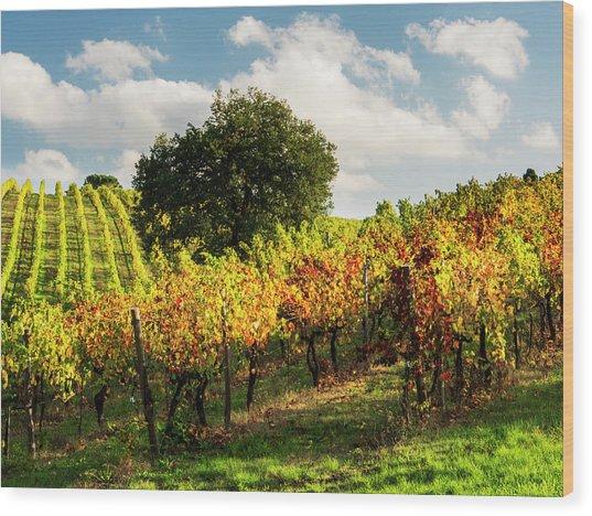 Italy, Tuscany, Chianti, Autumn Wood Print by Terry Eggers