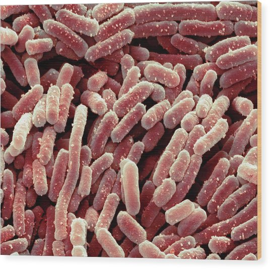 Lactobacillus Bacteria Wood Print by Steve Gschmeissner