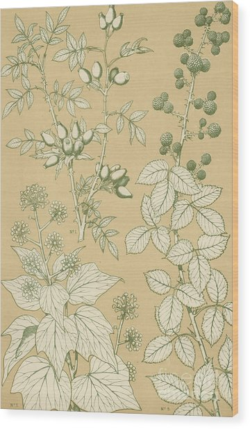 Leaves From Nature Wood Print