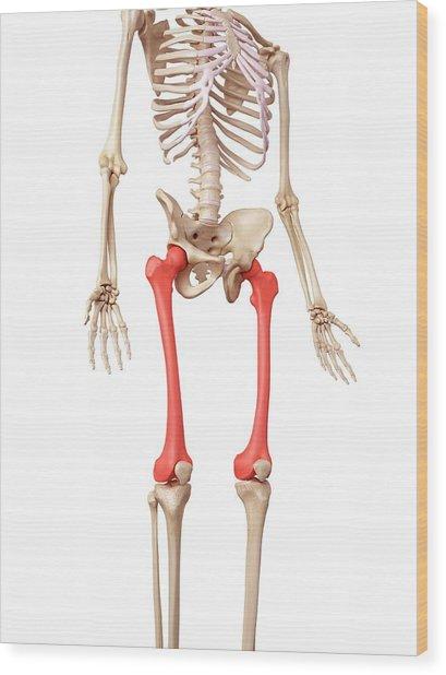 Leg Bones Wood Print by Sebastian Kaulitzki/science Photo Library