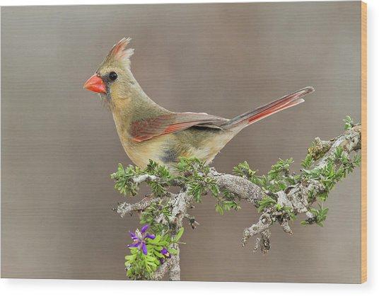 Northern Cardinal (cardinalis Cardinalis Wood Print by Larry Ditto