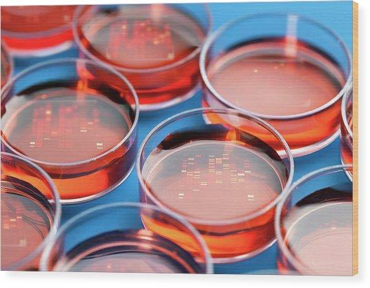 Petri Dishes Wood Print by Wladimir Bulgar