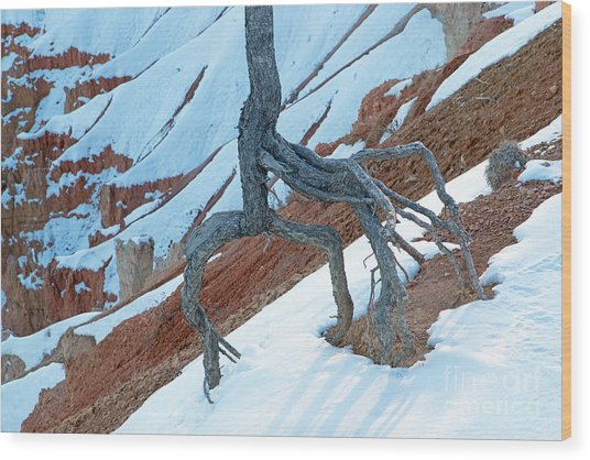 Sunrise Point Bryce Canyon National Park Wood Print