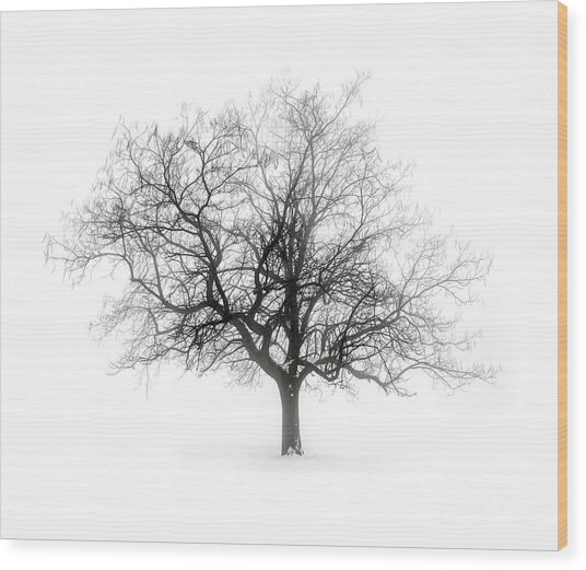 Winter Tree In Fog Wood Print
