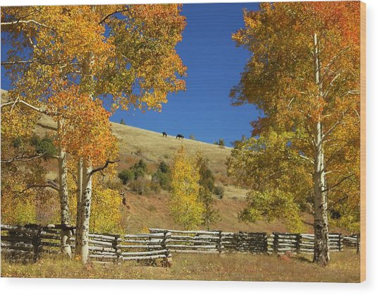 Autumn Cedar Mountain Utah Wood Print