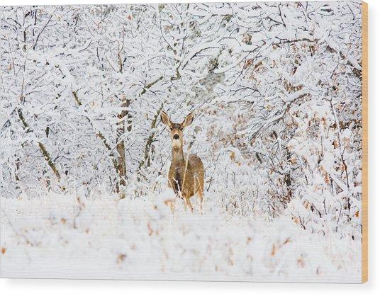 Doe Mule Deer In Snow Wood Print