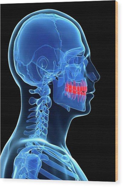 Human Teeth Wood Print by Sebastian Kaulitzki