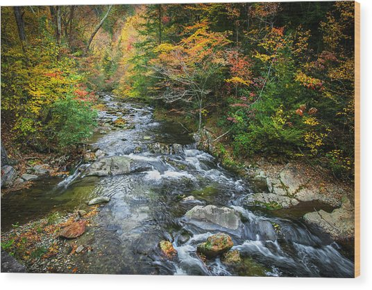 Stream Great Smoky Mountains Painted Wood Print