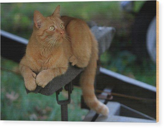 5-toe'd Orange Cat Of The Marina Wood Print