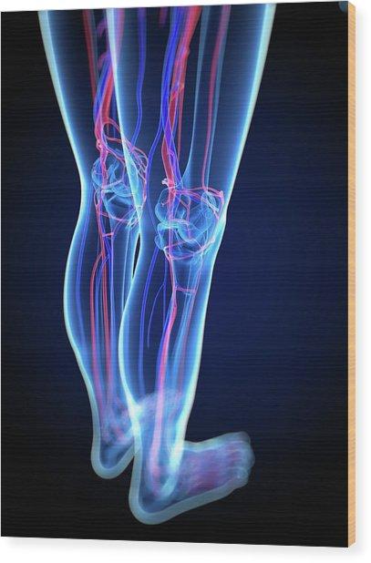 Vascular System, Artwork Wood Print by Sciepro