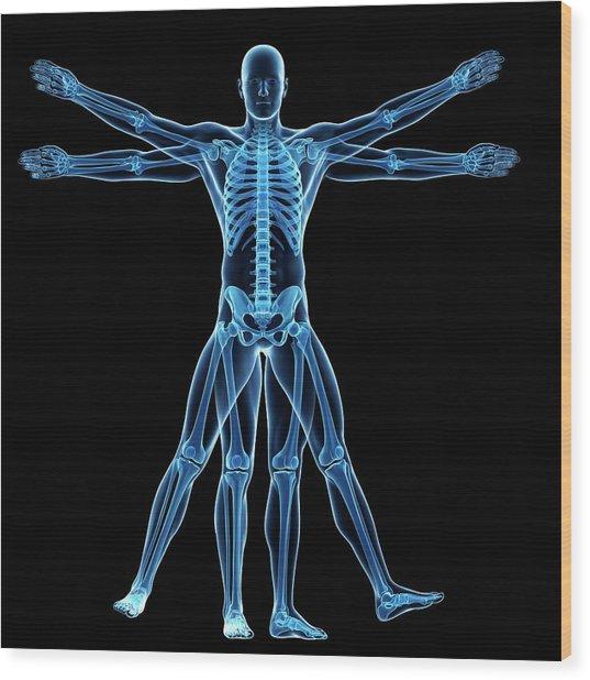 Vitruvian Man Skeleton Photograph By Sebastian Kaulitzki