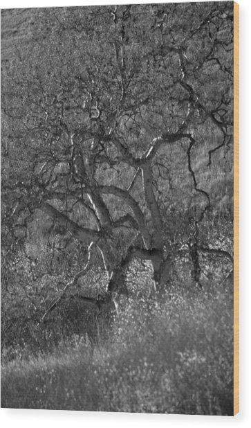 50 Shades Of Gray Trees Wood Print