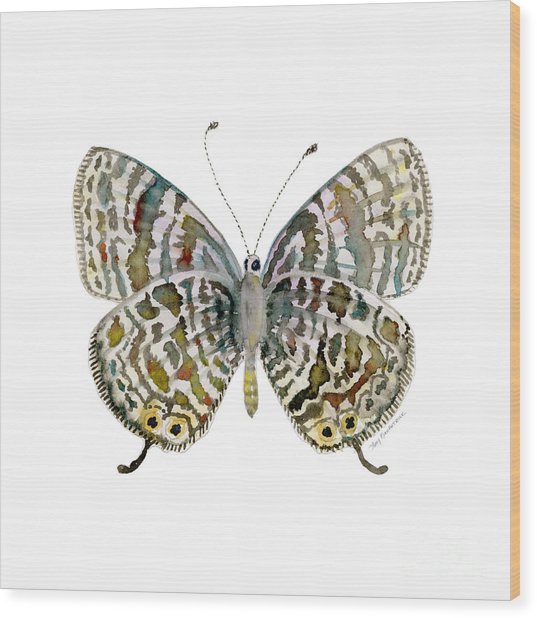 51 Lang's Short-tailed Blue Butterfly Wood Print