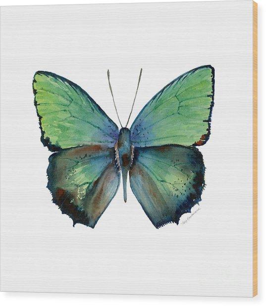 52 Arhopala Aurea Butterfly Wood Print