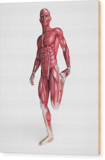 Human Muscular System Wood Print by Sebastian Kaulitzki