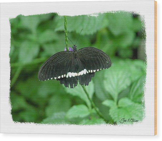 Butterflies Wood Print by Joe Oliver