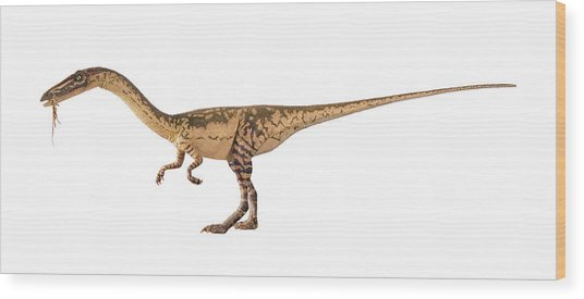 Coelophysis Dinosaur Model Wood Print by Natural History Museum, London/science Photo Library