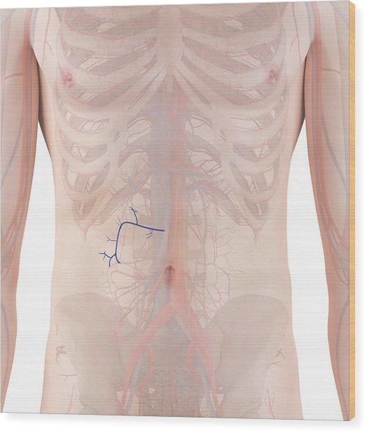 Human Veins Wood Print by Sciepro
