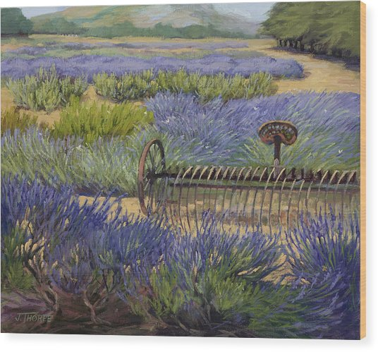 Edge Of The Lavender Field Wood Print