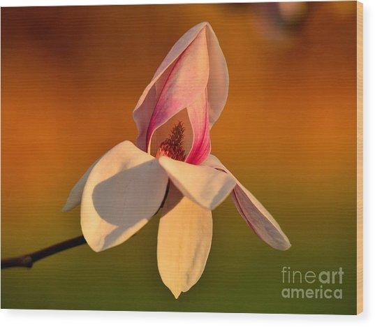 Magnolia Wood Print by Luminita Suse