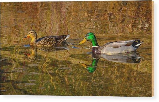 Mallard Ducks Wood Print by Brian Stevens