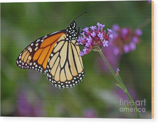 Monarch Butterfly In Garden Wood Print