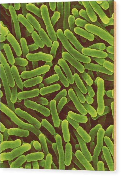 Salmonella Enterica Wood Print by Dennis Kunkel Microscopy/science Photo Library