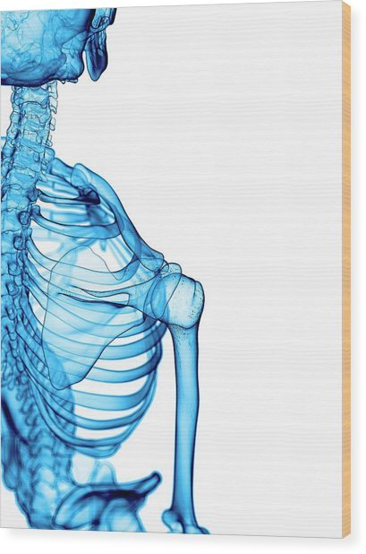 Shoulder Bones Wood Print by Sebastian Kaulitzki/science Photo Library