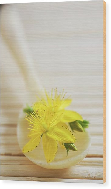St. Johns Wort (hypericum Perforatum) Wood Print by Gustoimages/science Photo Library