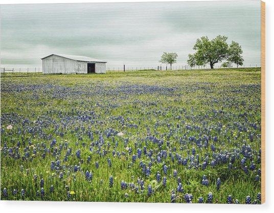 Texas Bluebonnets 6 Wood Print