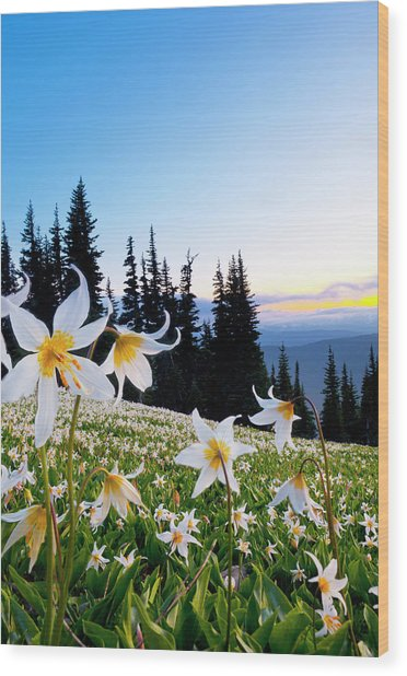 Usa, Washington State, Olympic National Wood Print by Gary Luhm