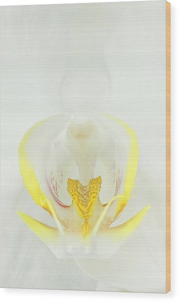 White Orchid-3 Wood Print