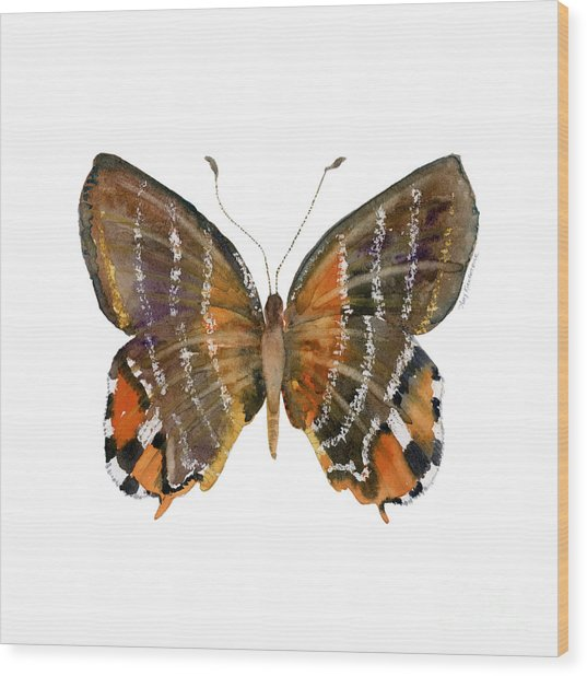 60 Euselasia Butterfly Wood Print