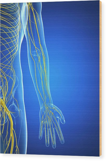 Nervous System Wood Print by Sciepro/science Photo Library