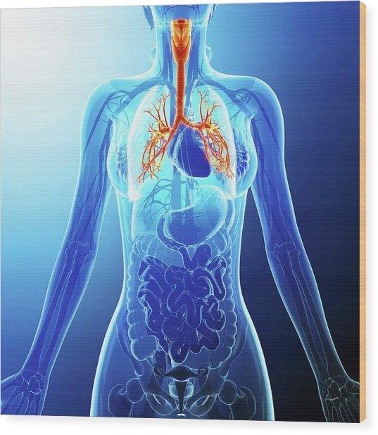 Human Cardiovascular System Wood Print by Pixologicstudio