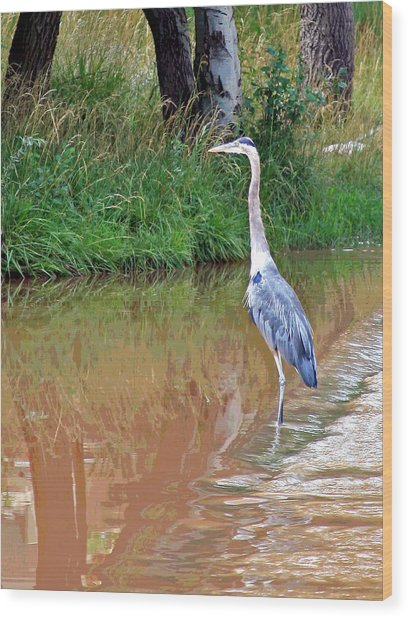 Blue Heron On The East Verde River Wood Print
